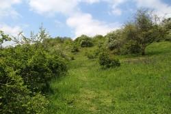 Přírodní památka Kavky. Celkový pohled na lokalitu.
