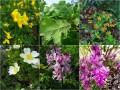 Přírodní památka Kavky jsou domovem mnoha zajímavých a krásných rostlin, stromů a květin.
