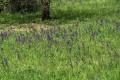 Rozkvetlá louka Přírodní památky Kavky.