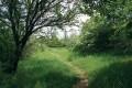 Přírodní památka Kavky. Chodníčky nás provedou i pod vzrostlými stromy.