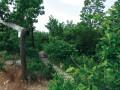 Přírodní památka Kavky. Chodníčky vás zavedou do nádherných zákoutí.