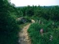 Přírodní památka Kavky. Z mnoha míst jsou krásné výhledy na město Brno i jeho okolí.